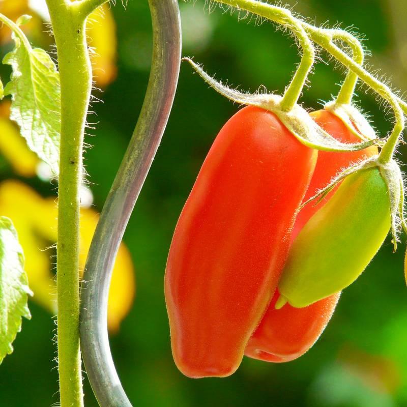 10x Tomatenspiralstab - Rankhilfe für Tomaten und andere Kletterpflanzen - Ø 5 mm x H: 110 cm - 2